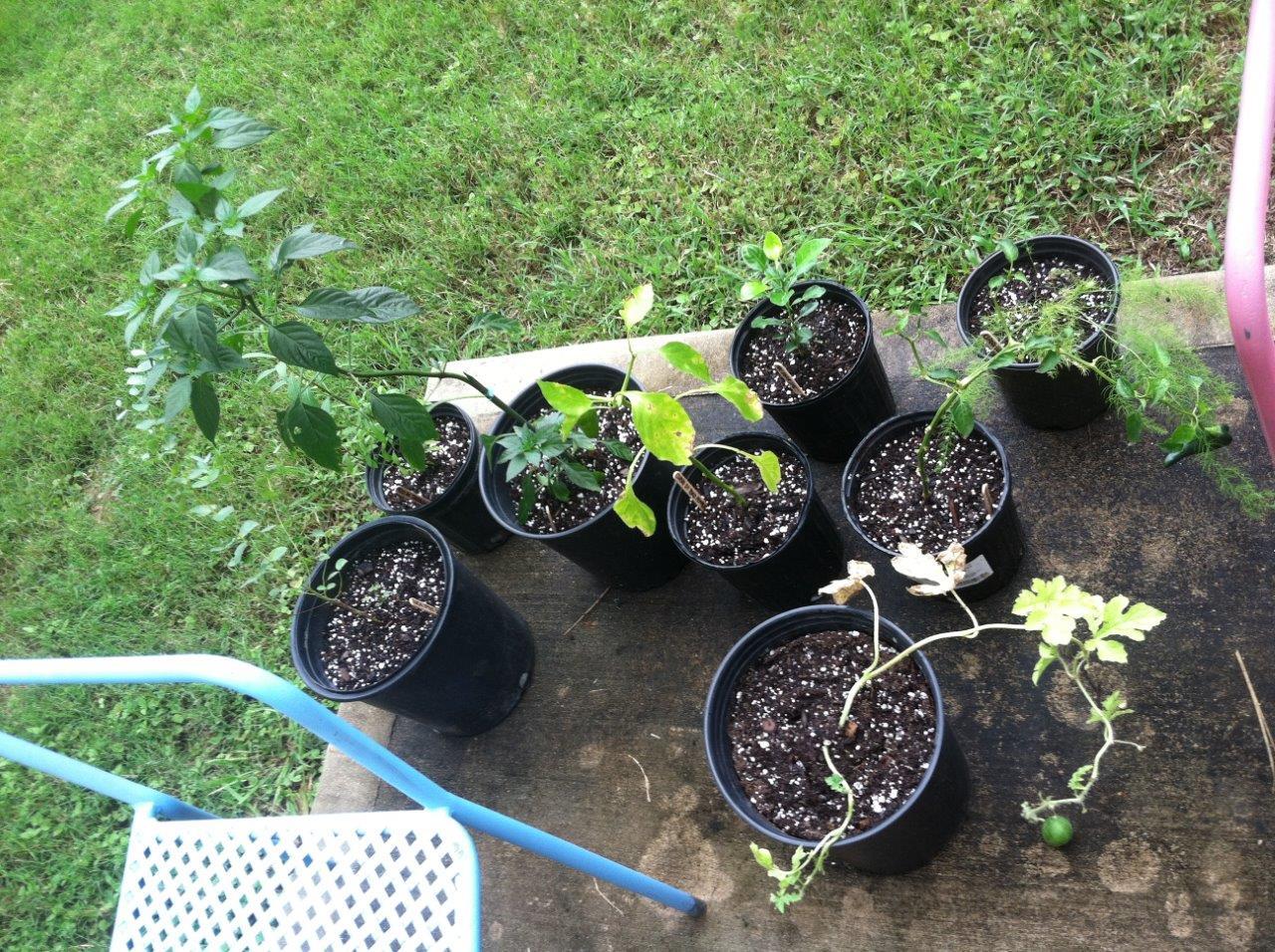 plants-small