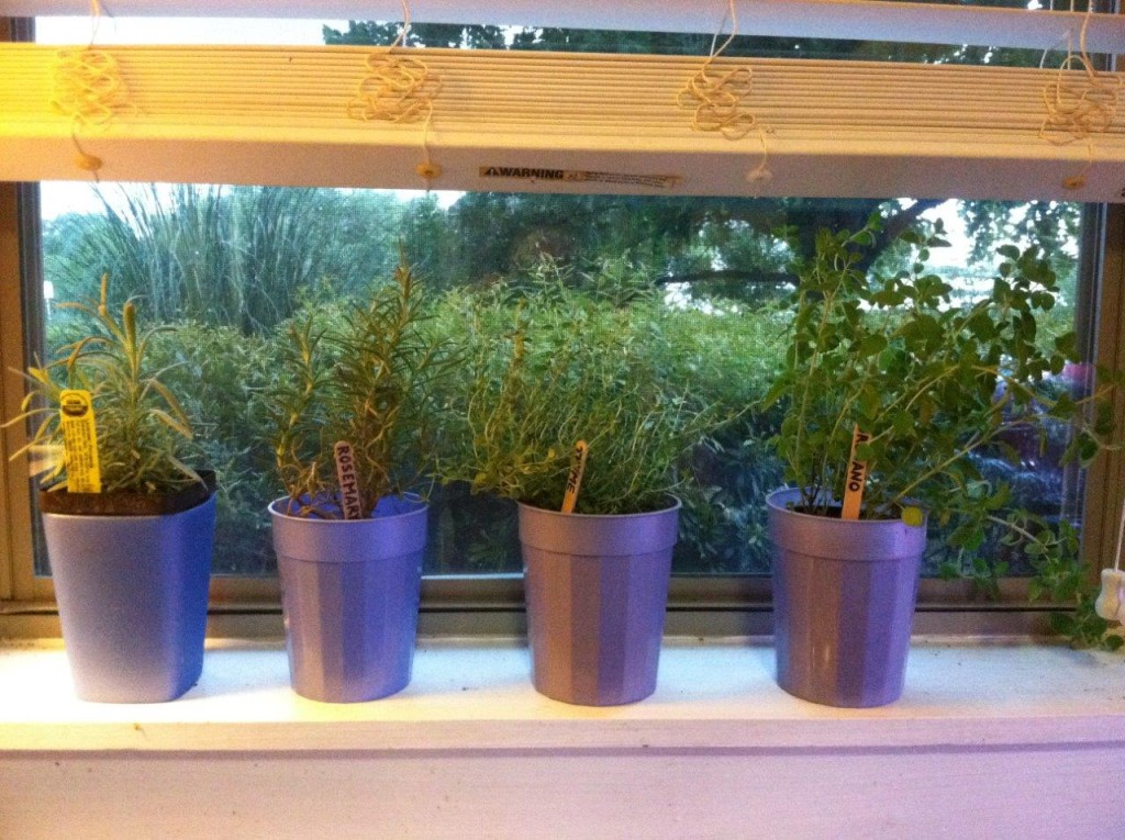 window-herbs-small